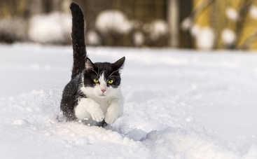 В понедельник погода в Украине будет морозной