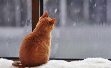 В пятницу погода в Украине вновь ухудшится