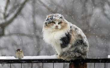 Сегодня в Украине погода ухудшится еще больше