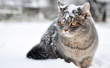 Зима возвращается в Украину