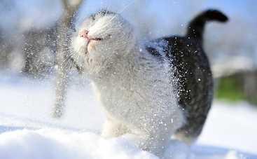 В понедельник в Украине ожидается сильное похолодание