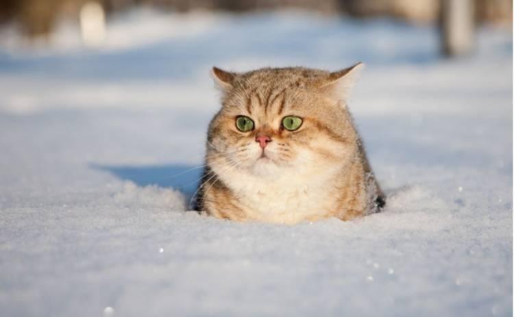 Сегодня в Украине сохранится снежная и холодная погода