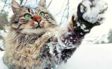 Зима решила вновь вернуться в Украину