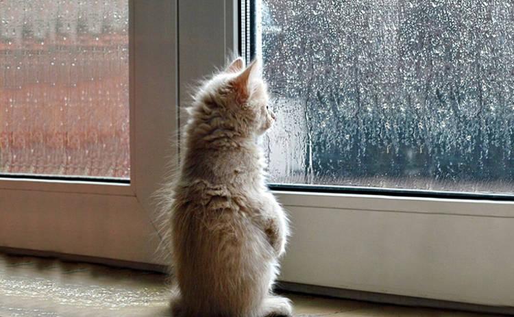 В понедельник Украину будет заливать дождями