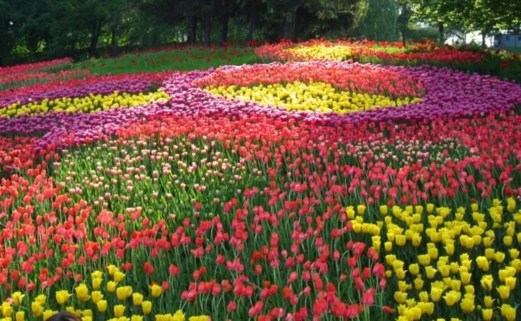 В Киеве пройдет ежегодная выставка тюльпанов