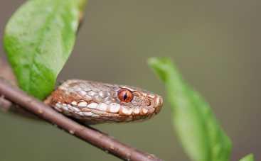 Что делать, если укусила змея: полезные советы