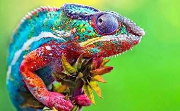 Тест: Как хорошо вы знаете цвета?