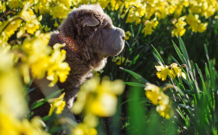 В Лондоне живет пушистая собака, которая ищет приключения