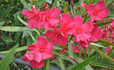 5 самых опасных цветов-убийц на планете: будьте осторожны