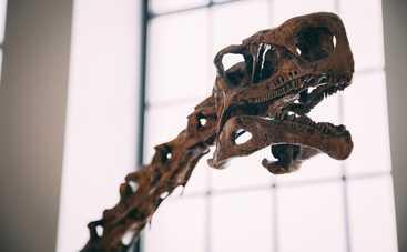 Динозавры-вегетарианцы: ученые нашли новый уникальный вид