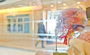 Ученые нашли в человеческом организме «второй мозг»