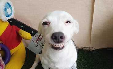 Сеть взорвали фотографии улыбающегося пса
