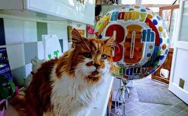 Самый старый кот в мире отпраздновал свое 30-летие