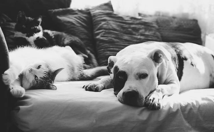 Фотограф доказала, что дружба между котом и собакой возможна