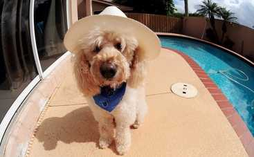 Фотограф показал собак, которые знают, как правильно отдыхать летом