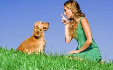 Как собаки общаются с людьми: популярные жесты