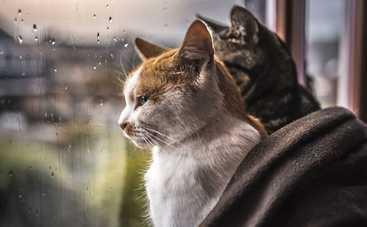 В пятницу 13-го украинцев ждет жара и дожди с грозами