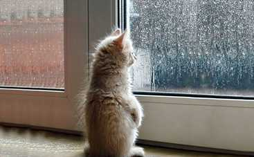 Сегодня в Украине ожидаются кратковременные дожди