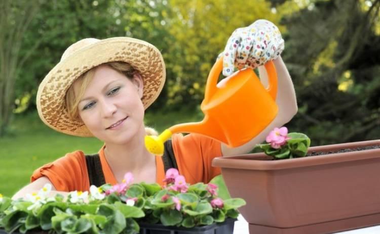 3 комнатных растения, которые могут навредить здоровью