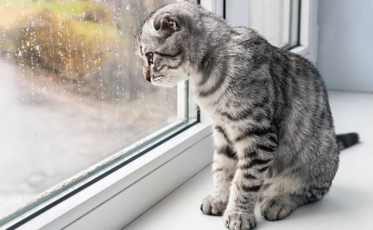 Сегодня в Украине погода резко ухудшится, пройдут сильные дожди
