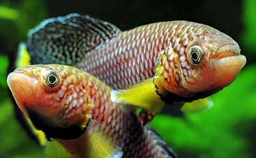Рыбы помогли найти новую причину старения организма