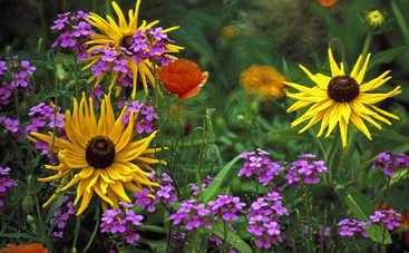 Клумбы непрерывного цветения: неувядающее украшение сада