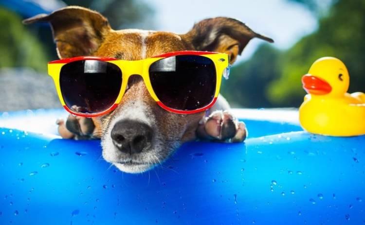Прогноз погоды на 25 августа: будет солнечно и жарко