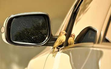 Суеверия и приметы: во что верят водители