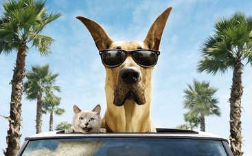 Собака в машине: советы, как сделать путешествие комфортным
