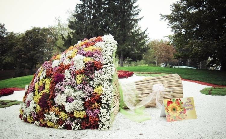 5 причин посетить осеннюю выставку хризантем в Киеве