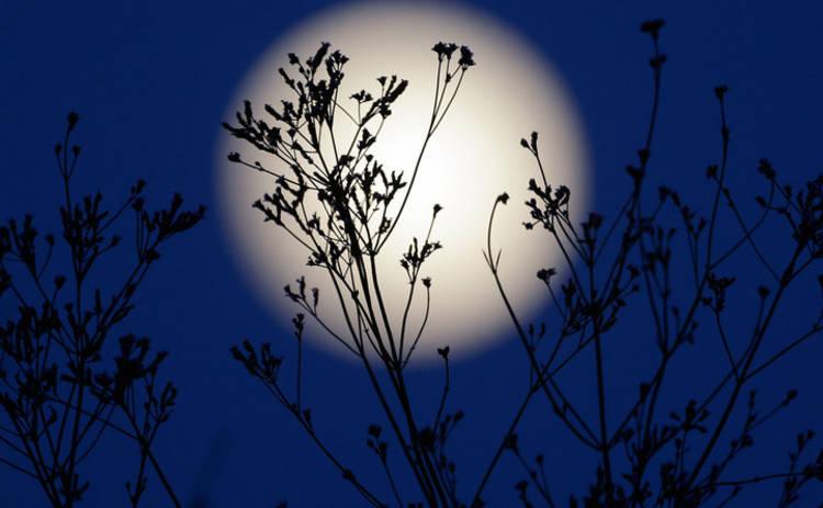 Лунный календарь: как провести 14 ноября