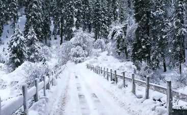 Синоптики рассказали, какой будет погода на Новый год в Украине