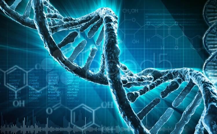 Ученые рассказали, какие органы человека в ходе эволюции исчезнут первыми