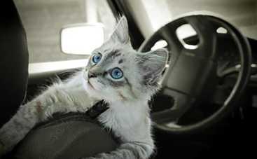 Очень необычный помощник автомобилистки или зачем в машине кошачий наполнитель