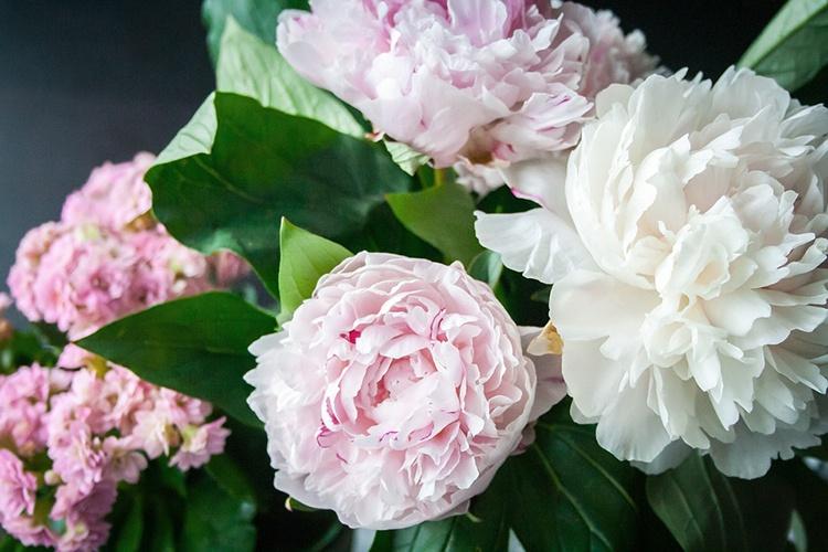 flower-823655_960_720