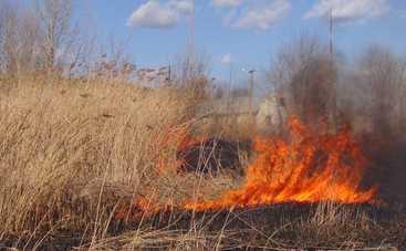 На Кировоградщине школьники остановили пожар в лесу и спасли маленького мальчика
