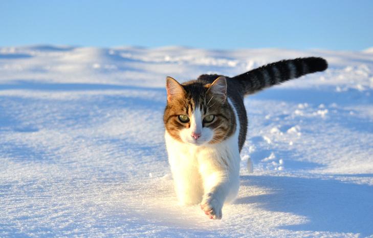 Погода вКрыму на25февраля: сильный ветер иморозец