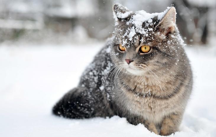 Когда прекратятся морозы иснегопады вУкраинском государстве: синоптик назвала дату