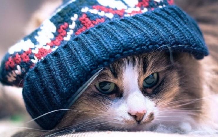 На Украинское государство надвигается резкое похолодание: температура снизится до +10°С
