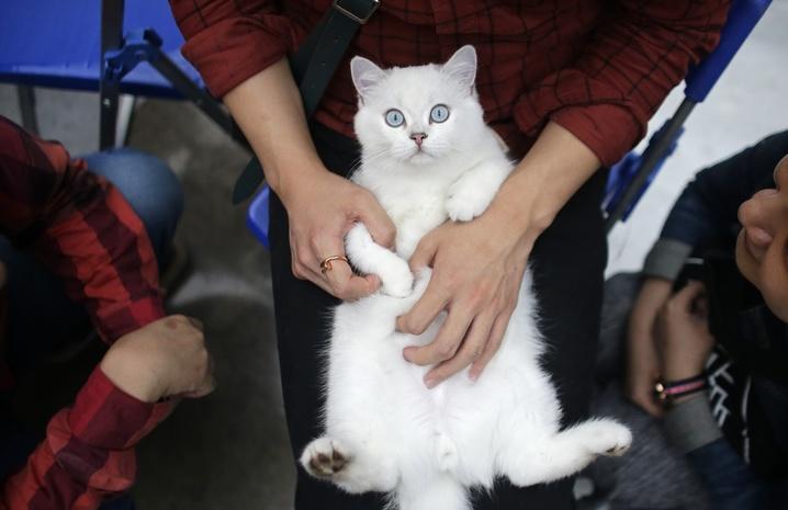 аллергия у кошек на ошейник от блох