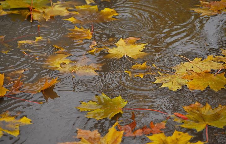 Дожди вМосковском регионе продлятся ссамого начала следующей недели