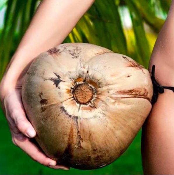 масло кокоса как маска для волос