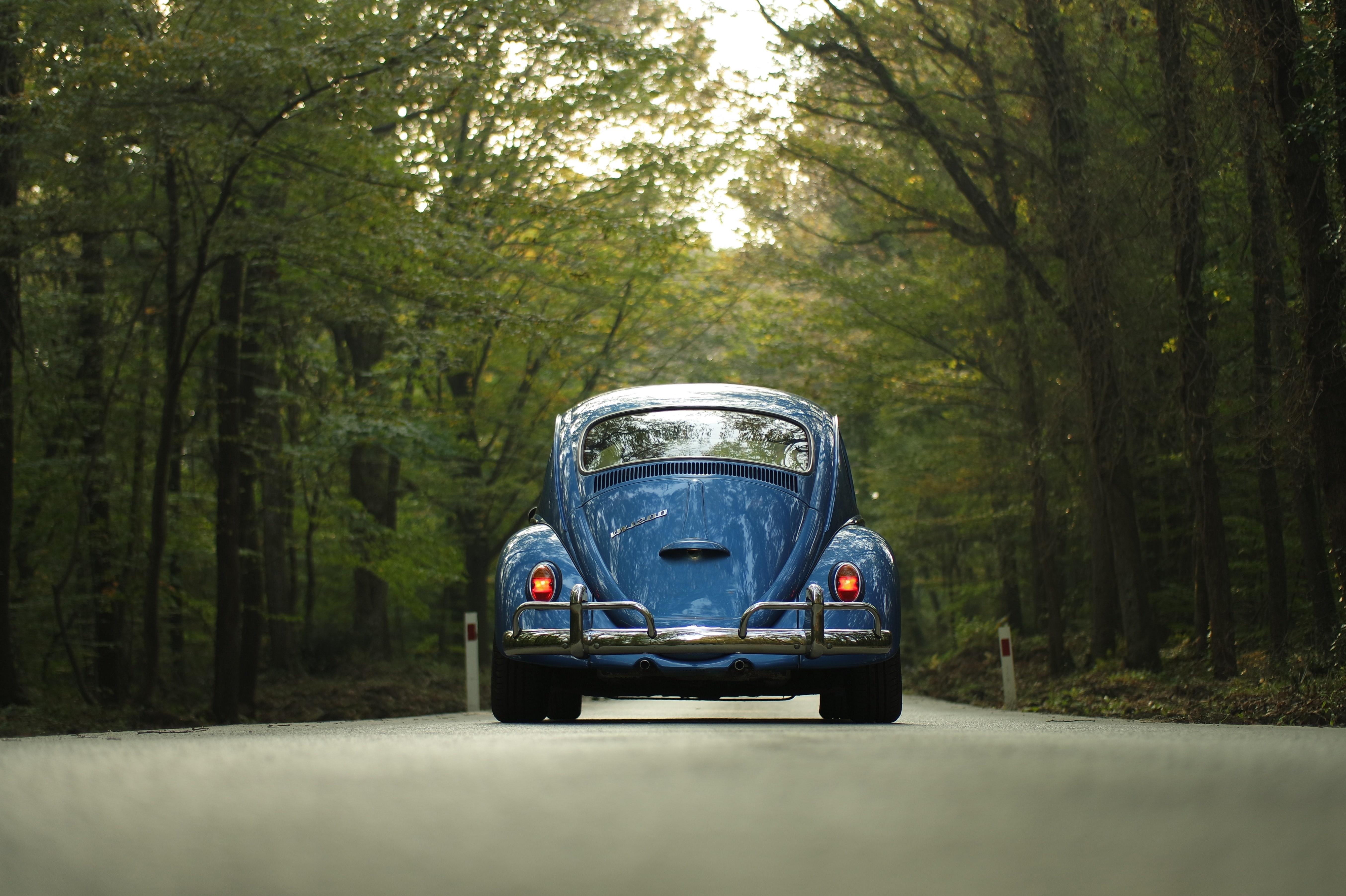 car-classic-car-forest-105032