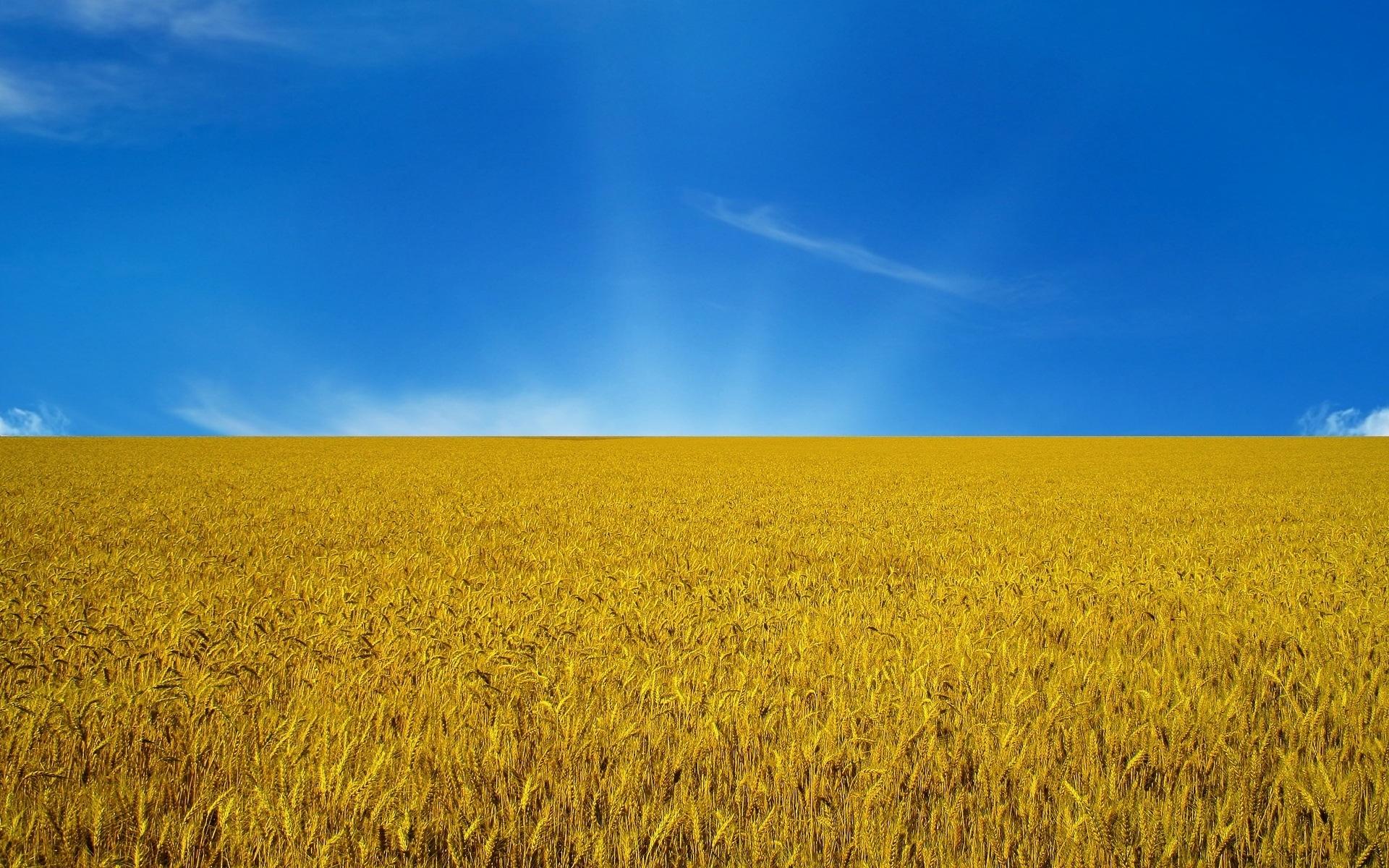 Украина вместе сКрымом иДонбассом 25 лет назад отдала голос занезависимость